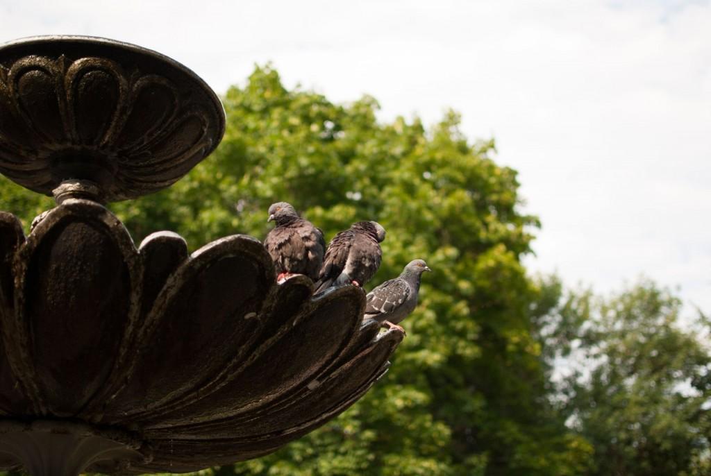 Владимирские голубки