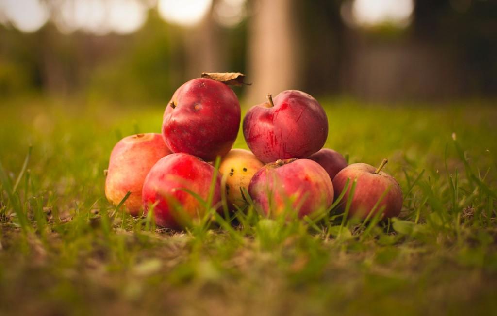 Владимирские яблоки