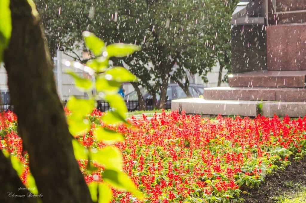 Владимир. Дождь, солнце и цветы 03