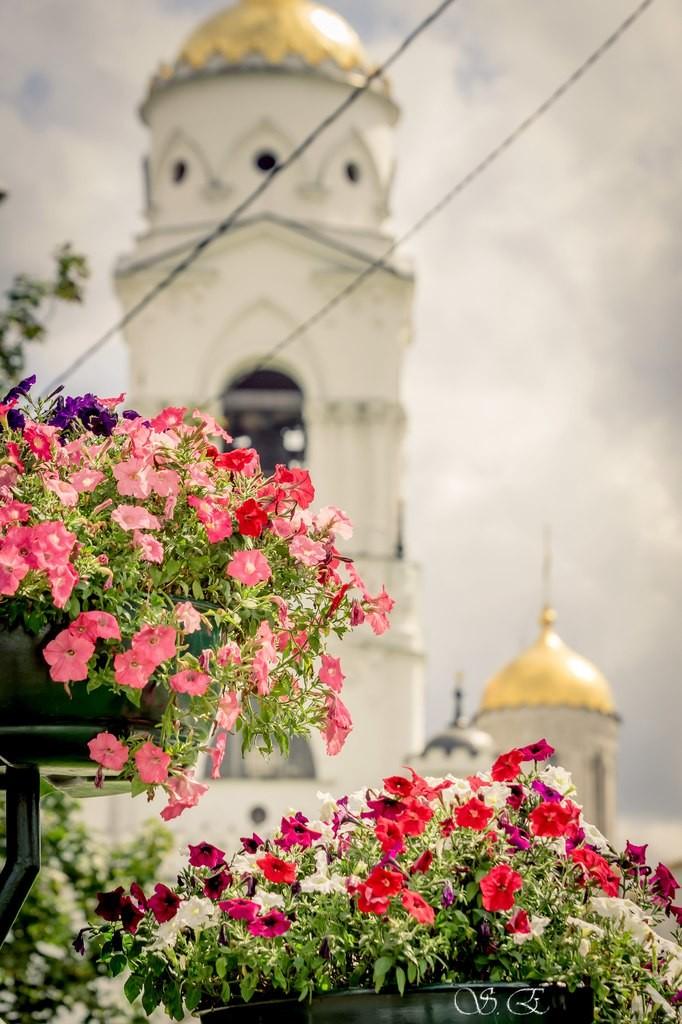 Городские цветы 01