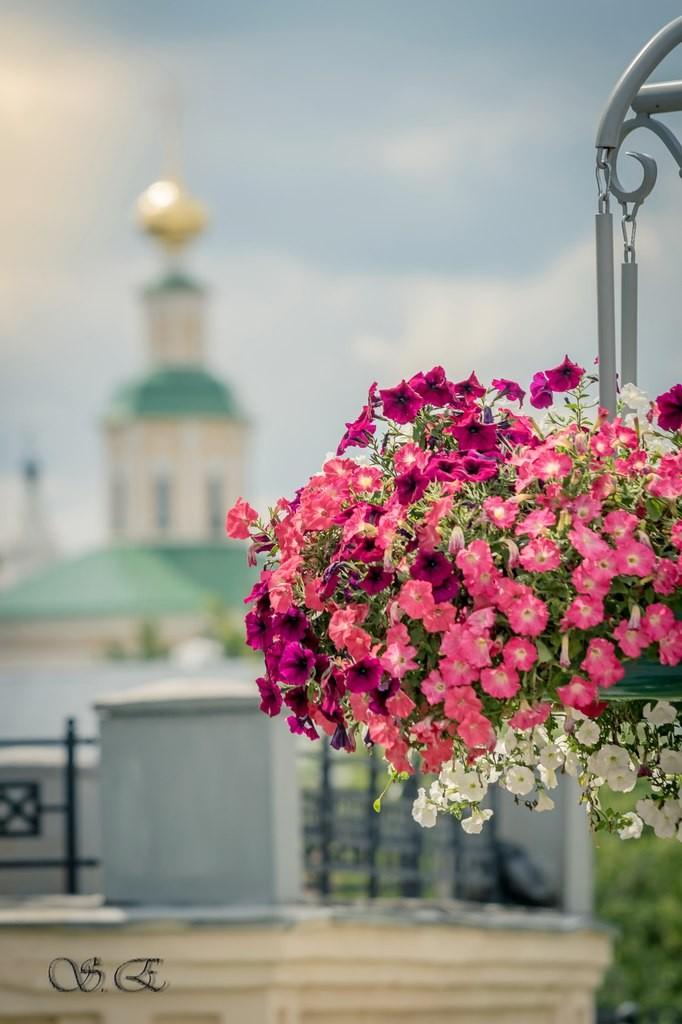 Городские цветы 02