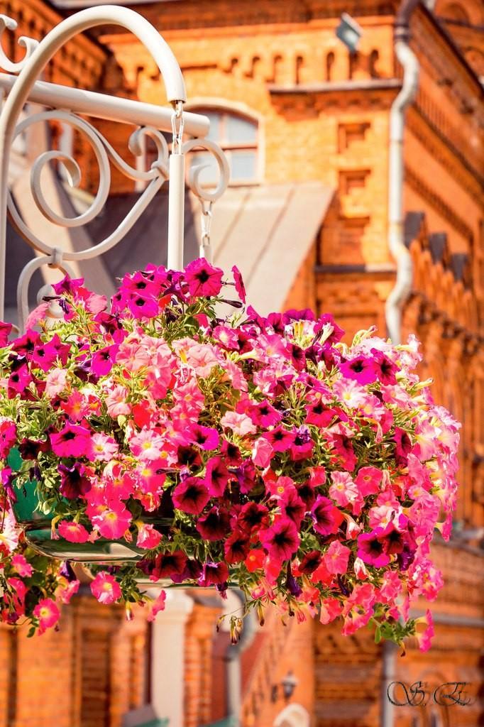 Городские цветы 03
