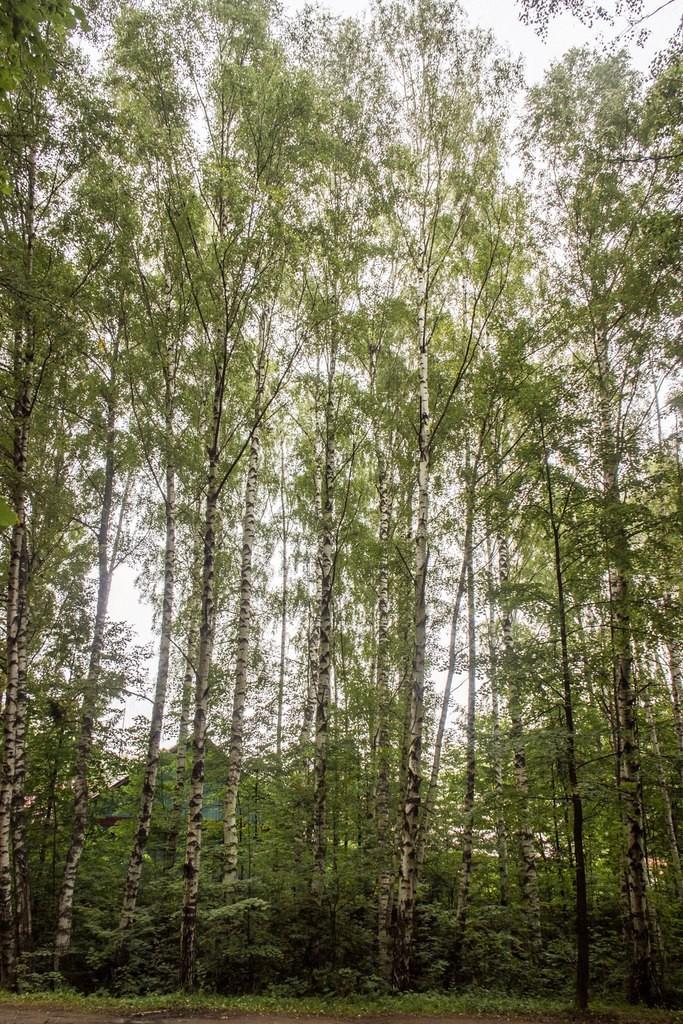Загородный лесопарк Комзяки (Вязниковский район) 03