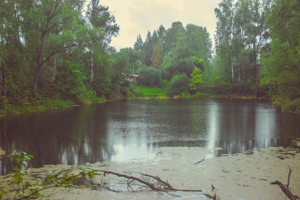 Загородный лесопарк Комзяки (Вязниковский район) 04