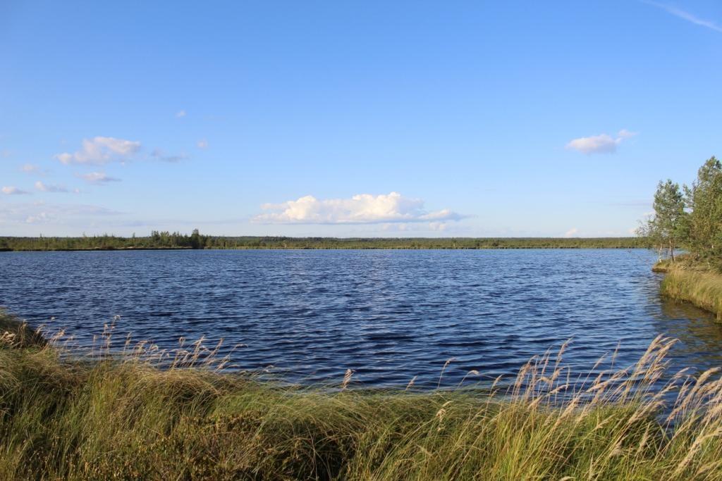 Иванищевское болото (Гусь-Хрустальный район) 20