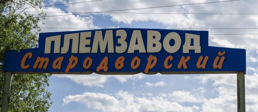 Племзавод Стародворский