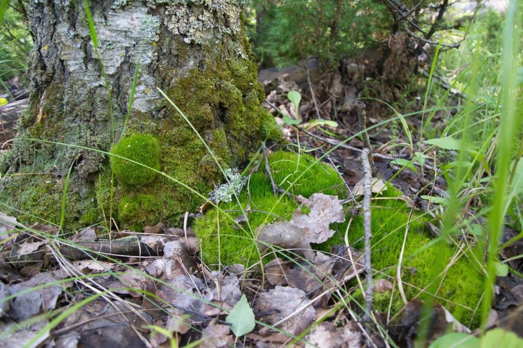 Природа Ярополча 08