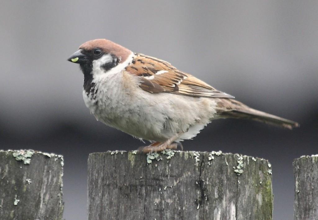 Птицы Владимирской области 03