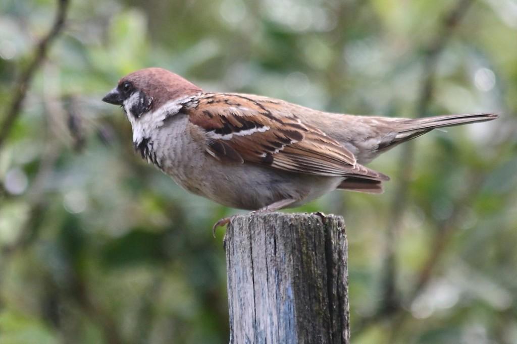 Птицы Владимирской области 04