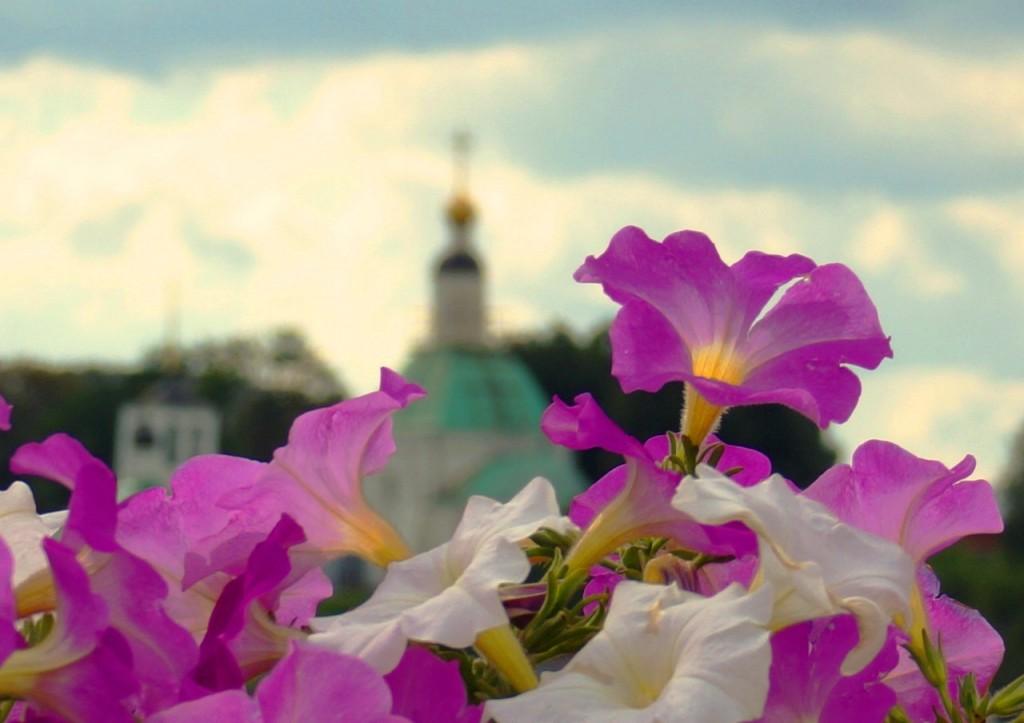 Цветы Владимира от Юлии Селиверстовой