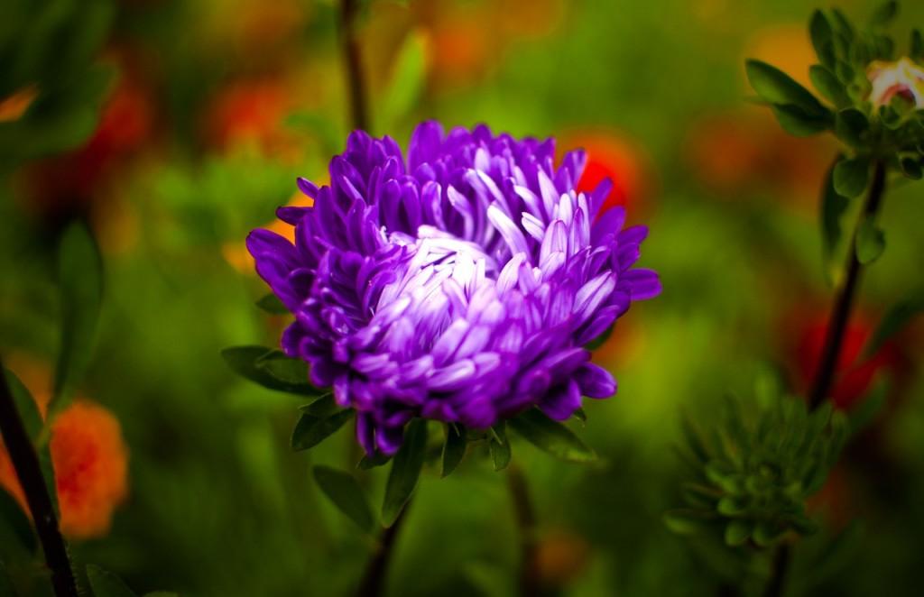 Цветы Владимирской области 02