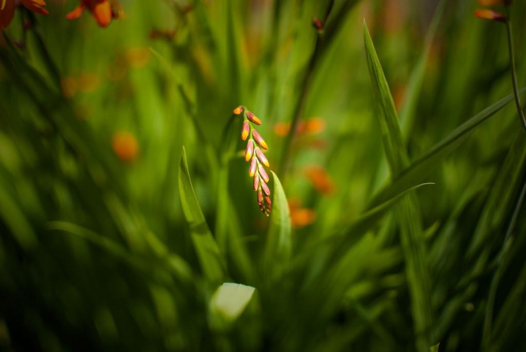 Цветы Владимирской области 05