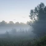FOLK SUMMER FEST 2015 Гусь-Хрустальный 006