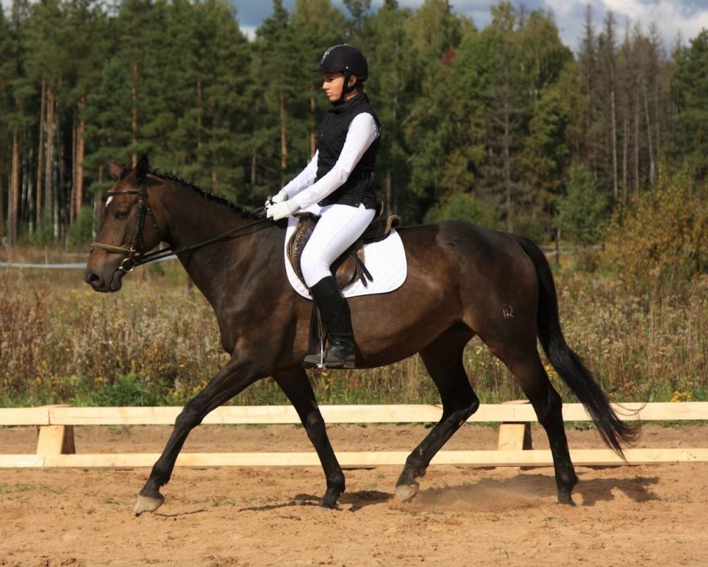 В деревне Старово прошли соревнования по конному спорту 06