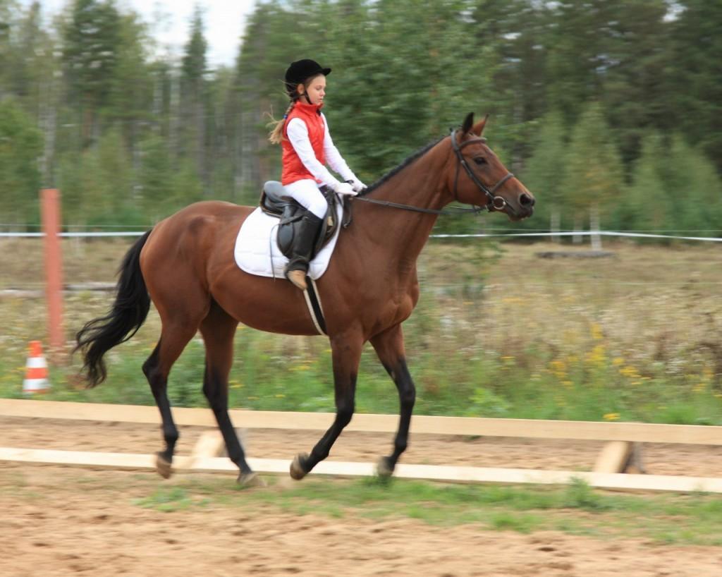 В деревне Старово прошли соревнования по конному спорту 08