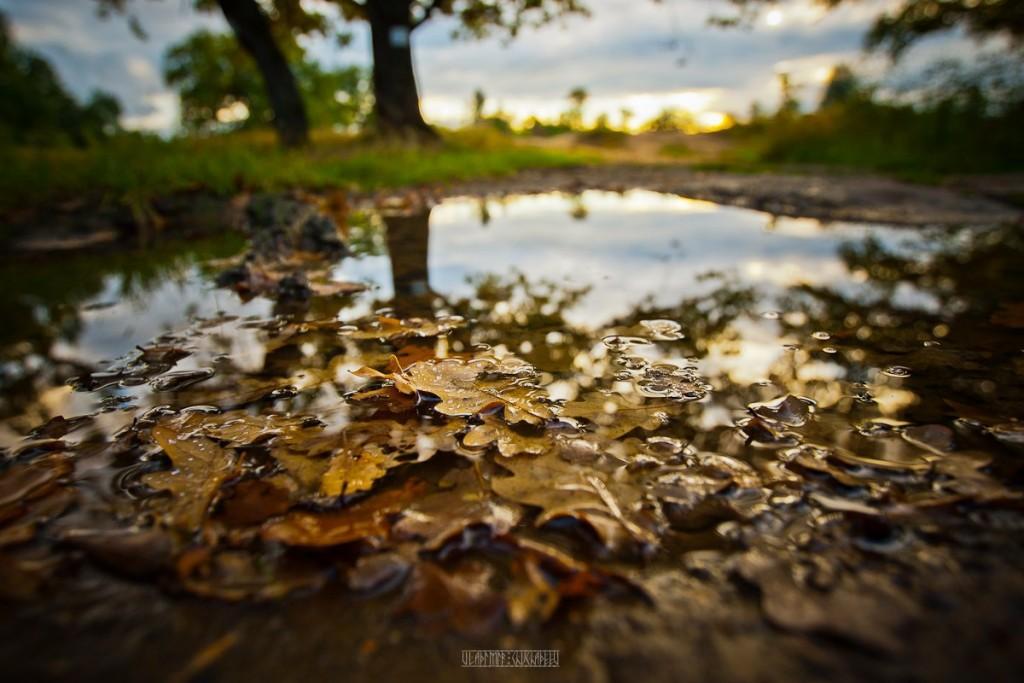 Загородный парк Владимира от Владимира Чучадеева 10
