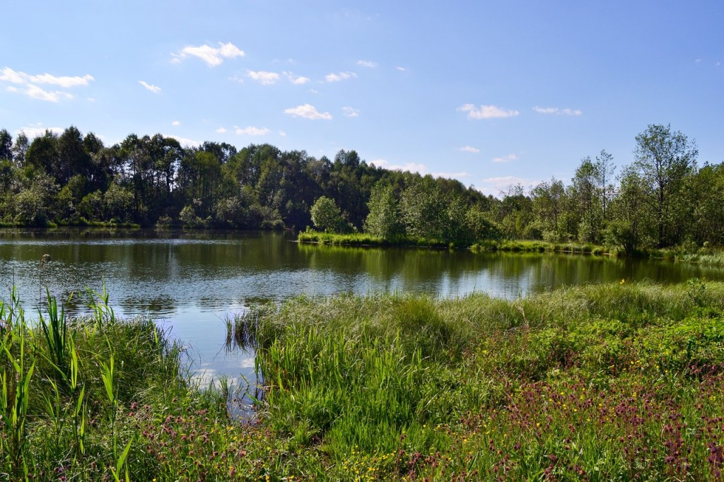 Мещера Владимирская область