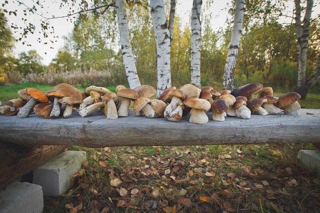 Осень - Грибная пора 05