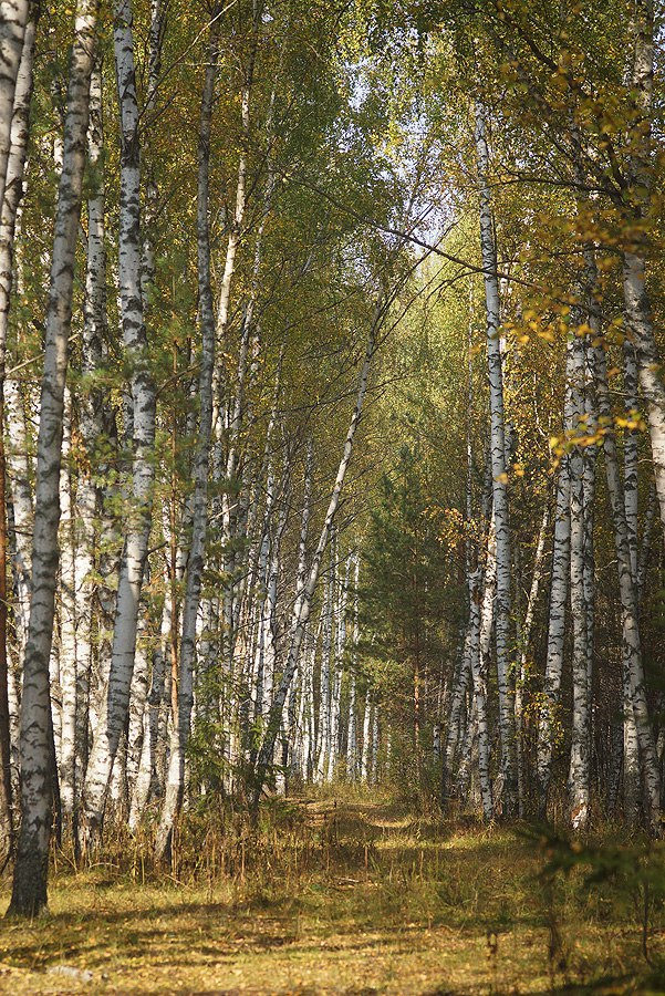 Осень - Грибная пора 06