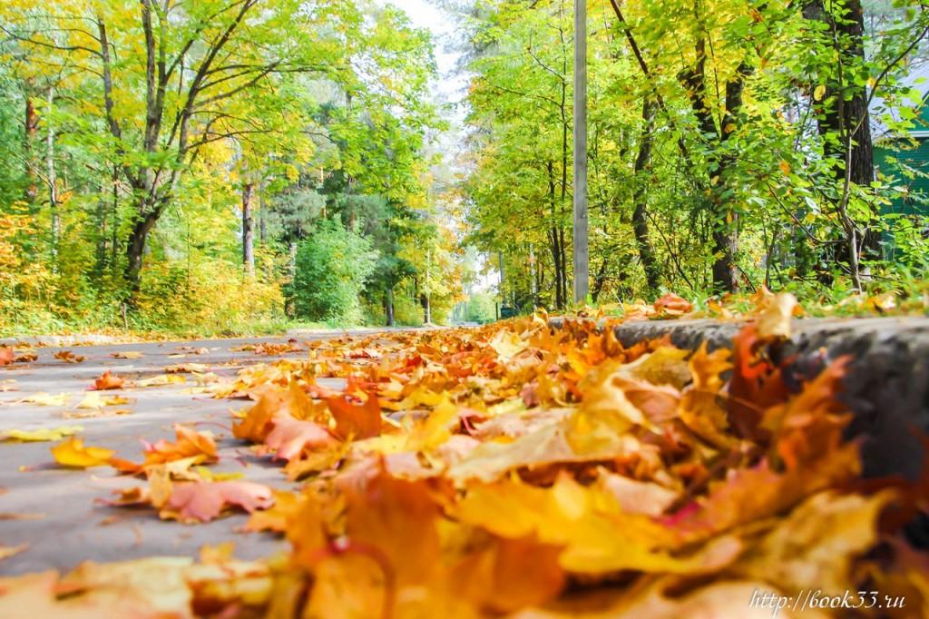 Осень на Вербовском 05
