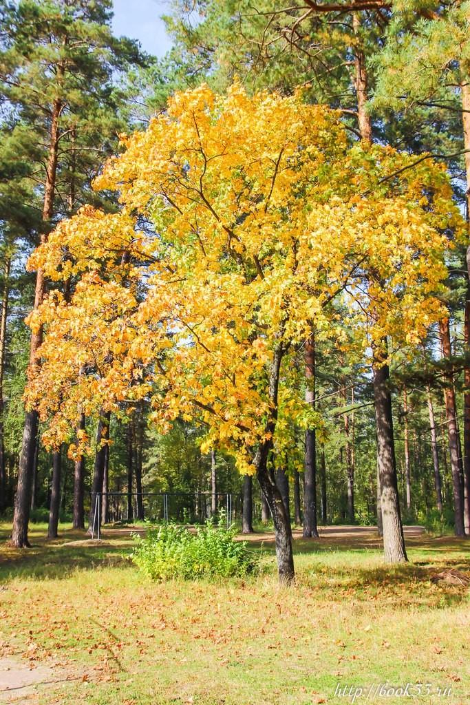 Осень на Вербовском 08