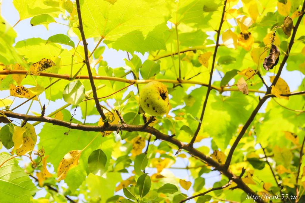 Осень на Вербовском 09