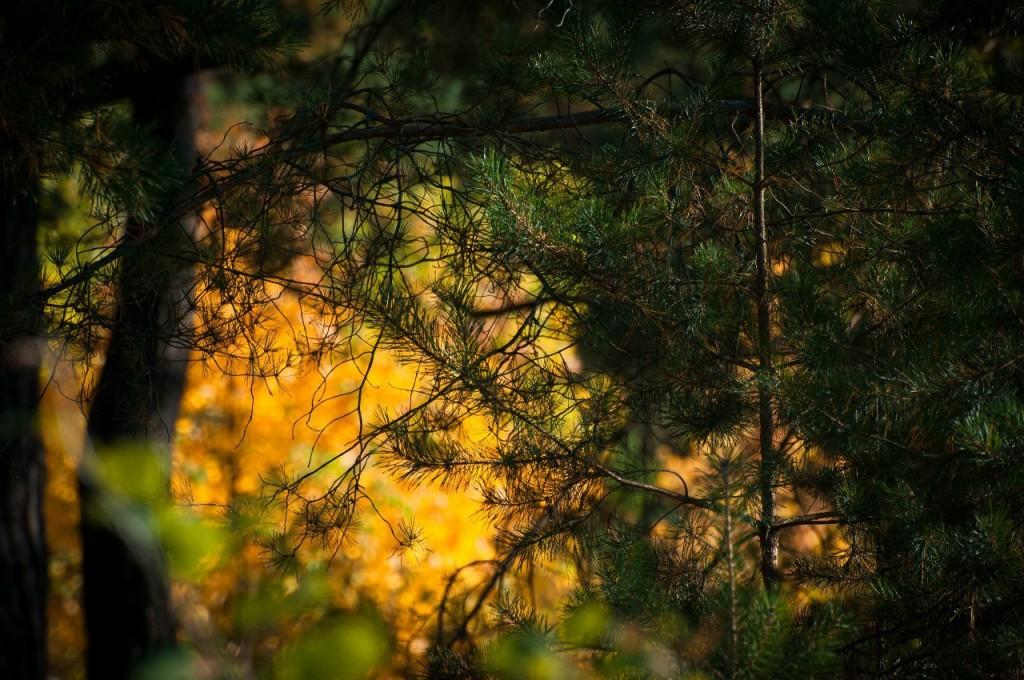 Очарование осени III от Бориса Пучкова 09