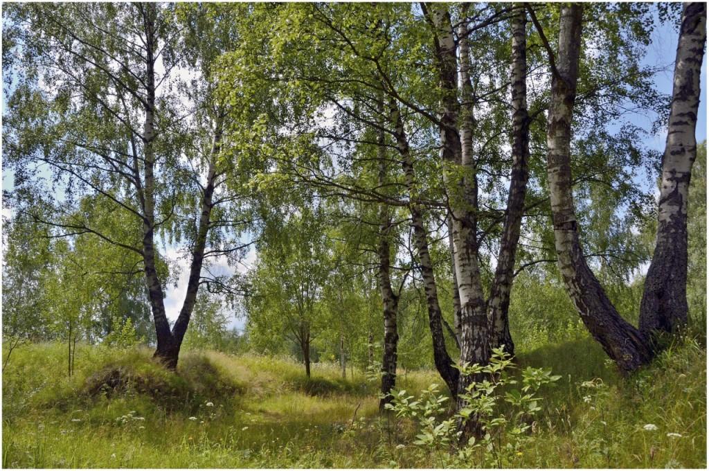 Природа Ковровского района 02