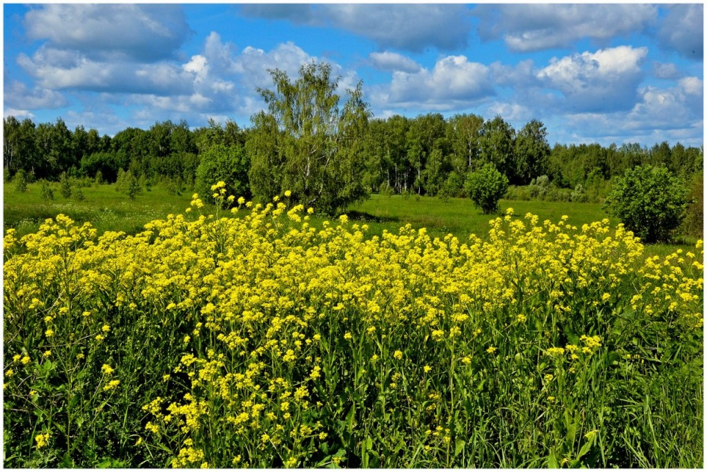 Природа Ковровского района 05