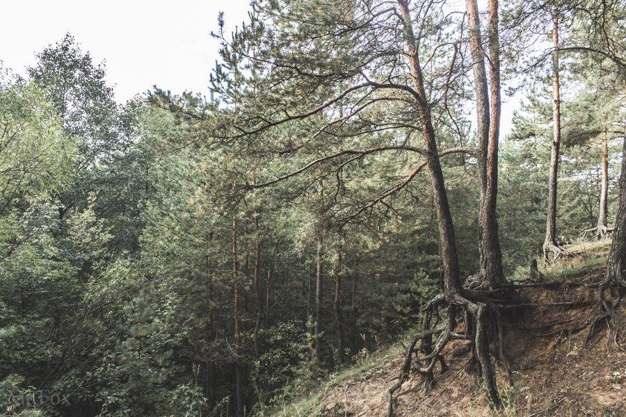 Природа загородного парка 04