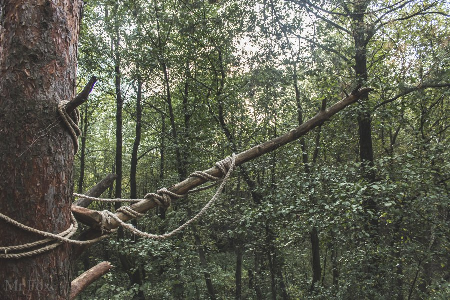 Природа загородного парка 06