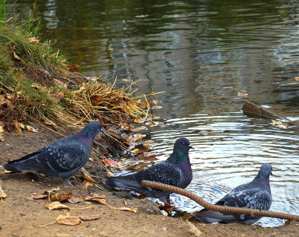 Птички Владимирские 06