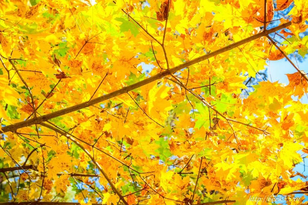 Теплая Осень на Вербовском 10