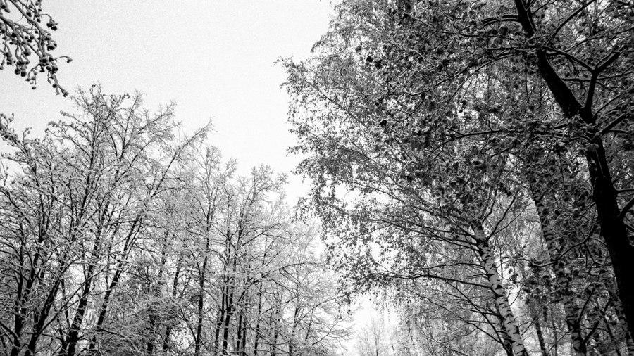 А вот и зима 01