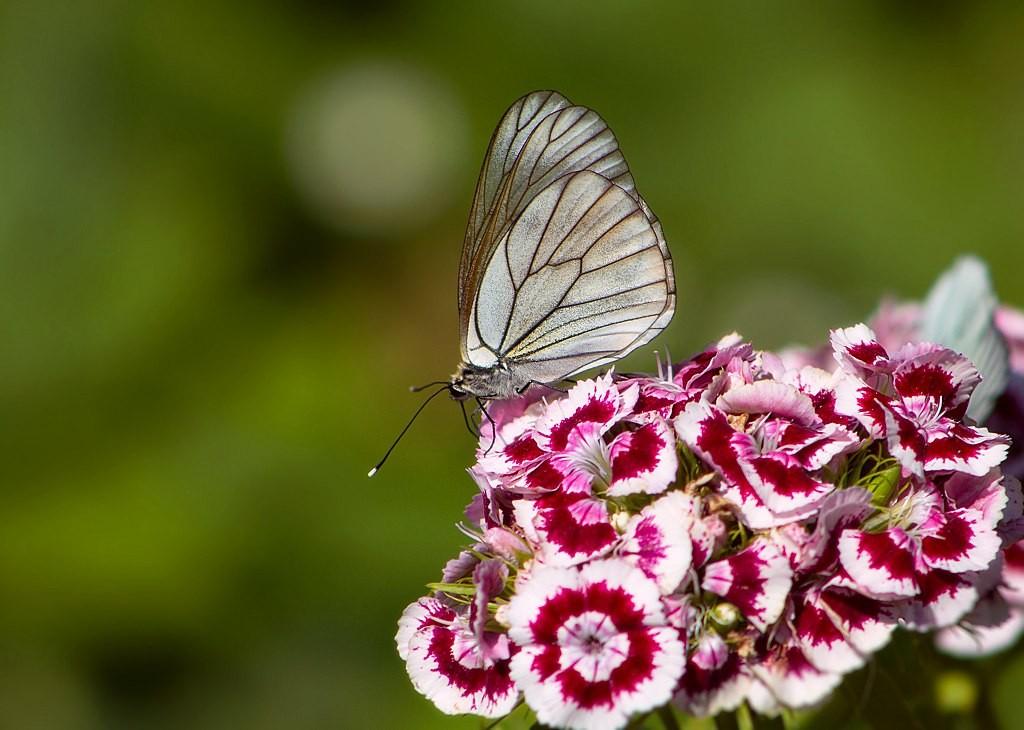 Бабочки! Много бабочек! 01