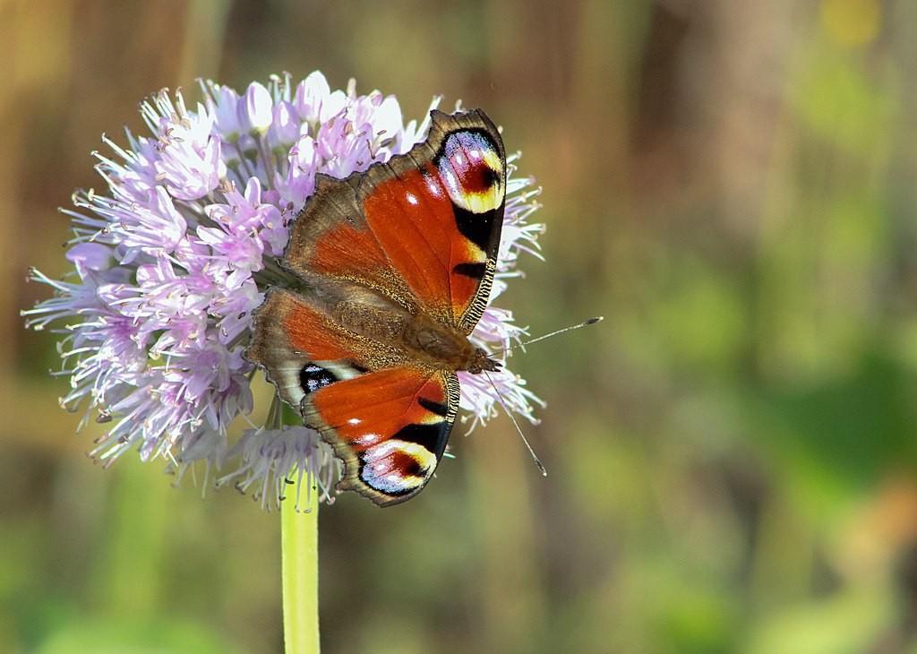 Бабочки! Много бабочек! 02