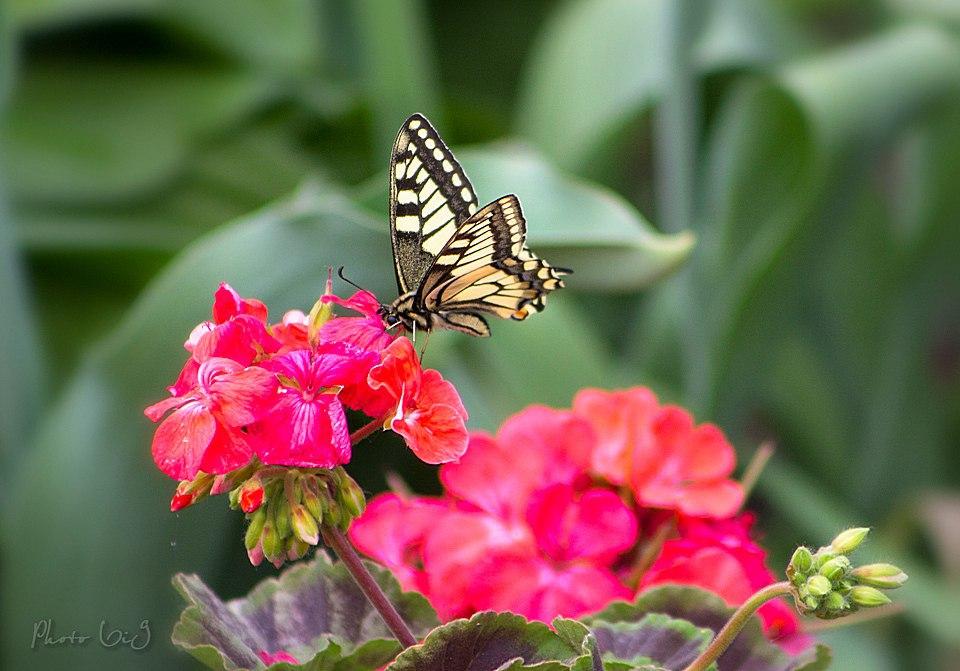 Бабочки! Много бабочек! 04