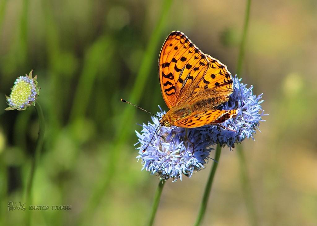 Бабочки! Много бабочек! 05