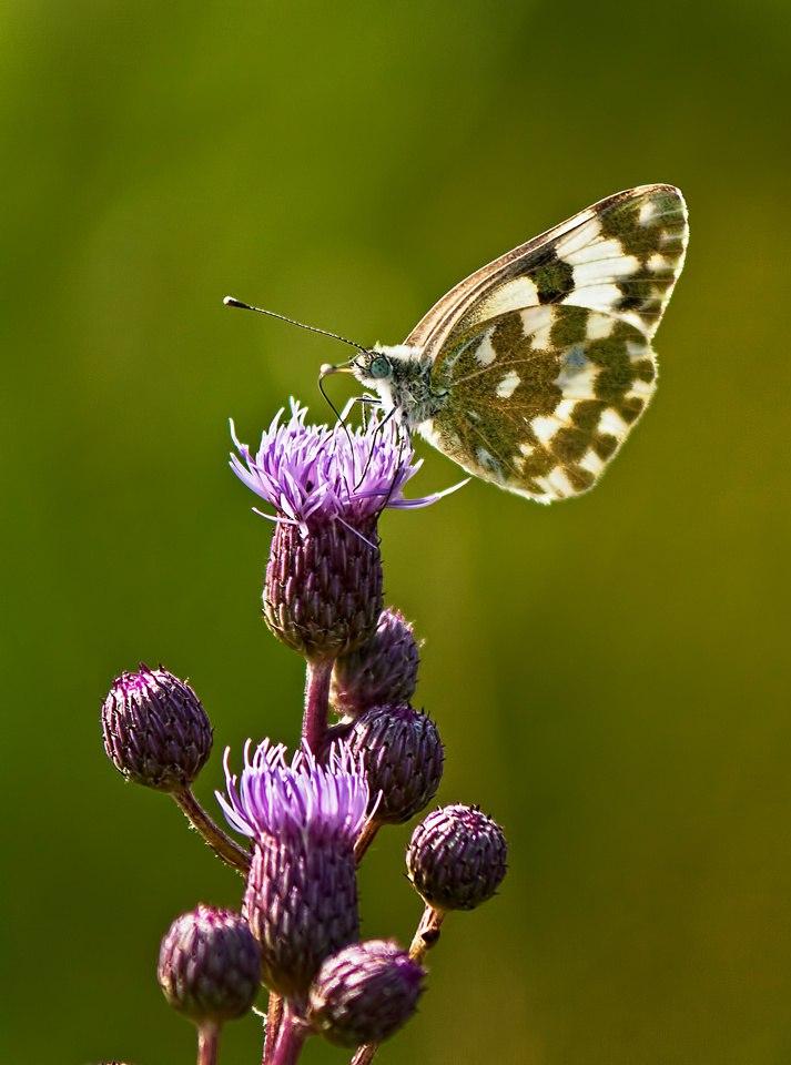 Бабочки! Много бабочек! 06