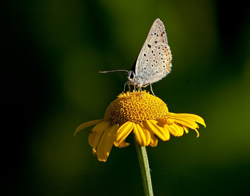 Бабочки! Много бабочек! 08