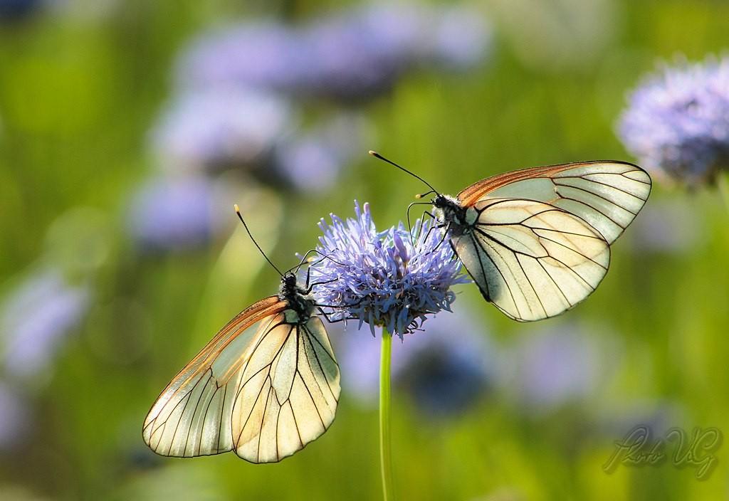 Бабочки! Много бабочек! 09