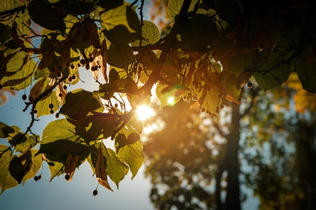 В осеннем парке городском 09