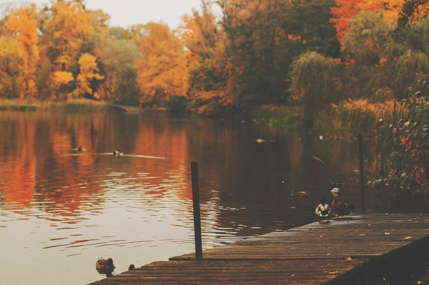 Журнал Путешественника Осень