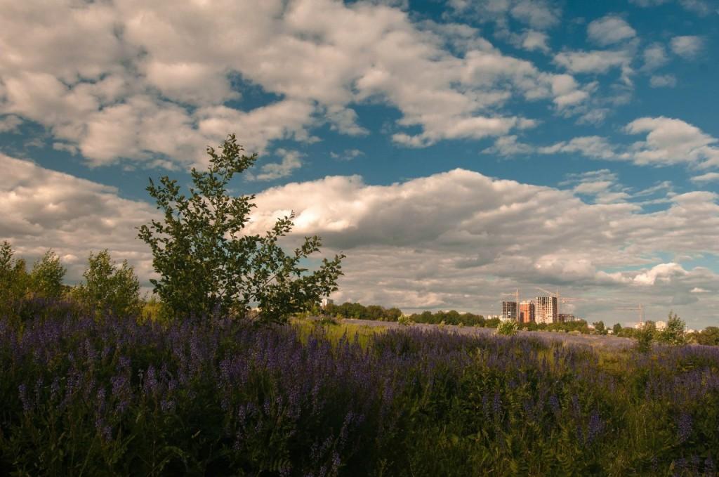 Лето в парке Дружба (Владимир) 10
