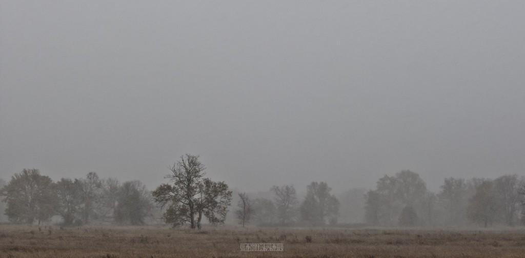 Метель в Клязьминской пойме 04