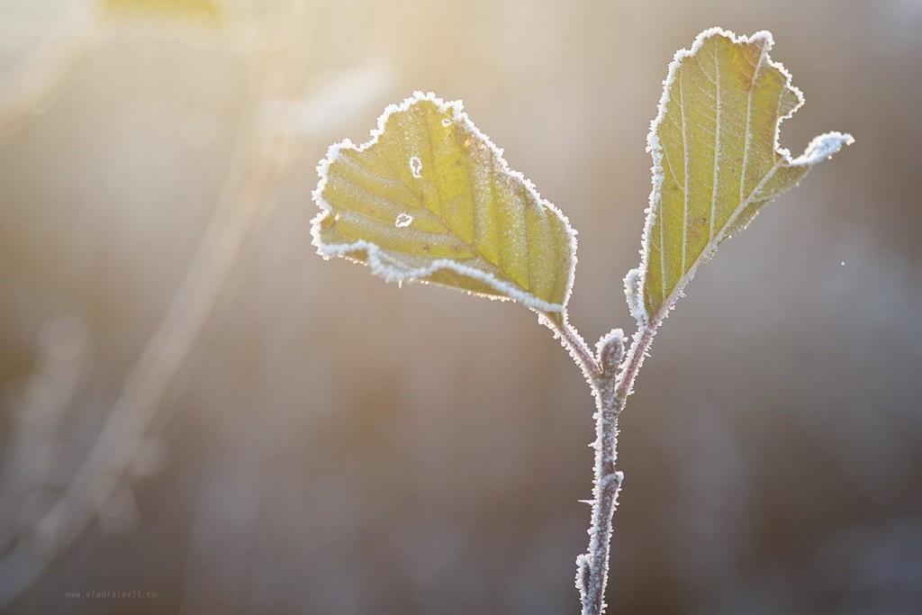 Морозное владимирское утро 06