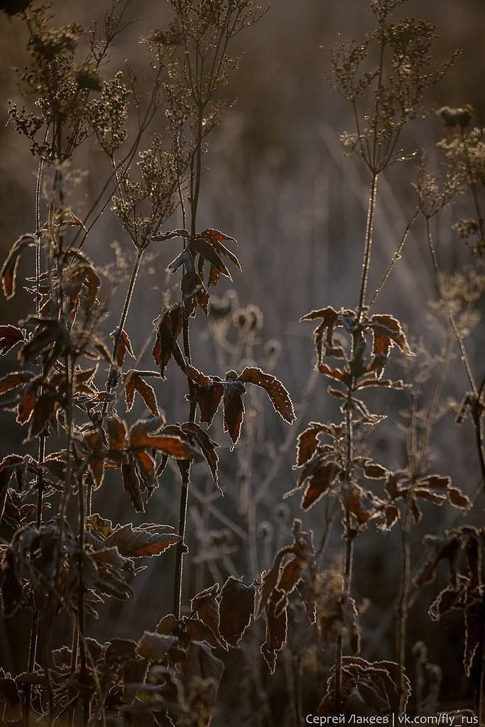 Морозное утро в Клязьменской пойме 05