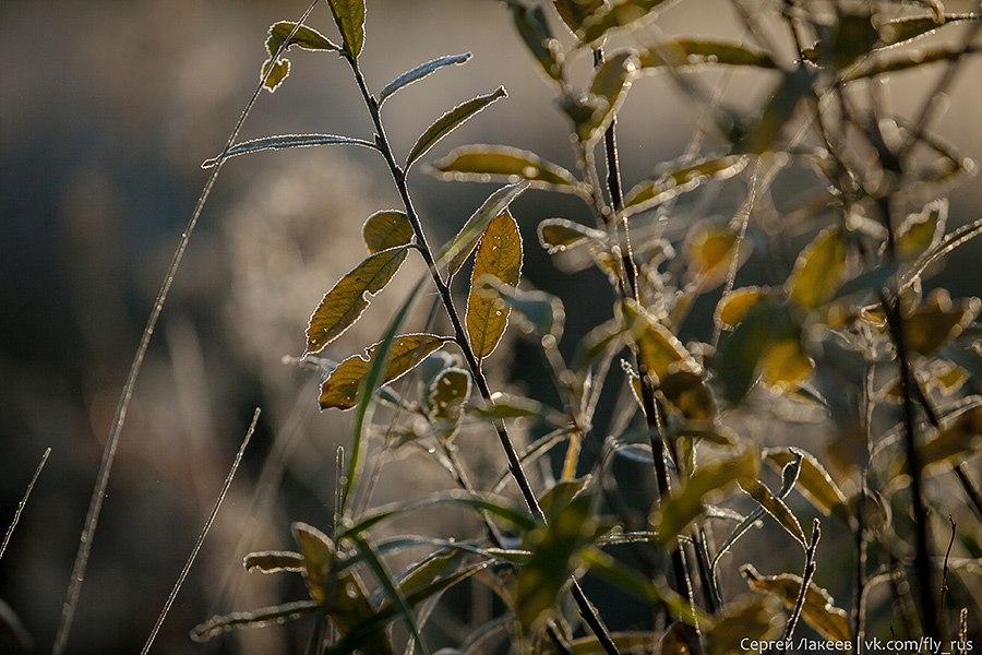 Морозное утро в Клязьменской пойме 10
