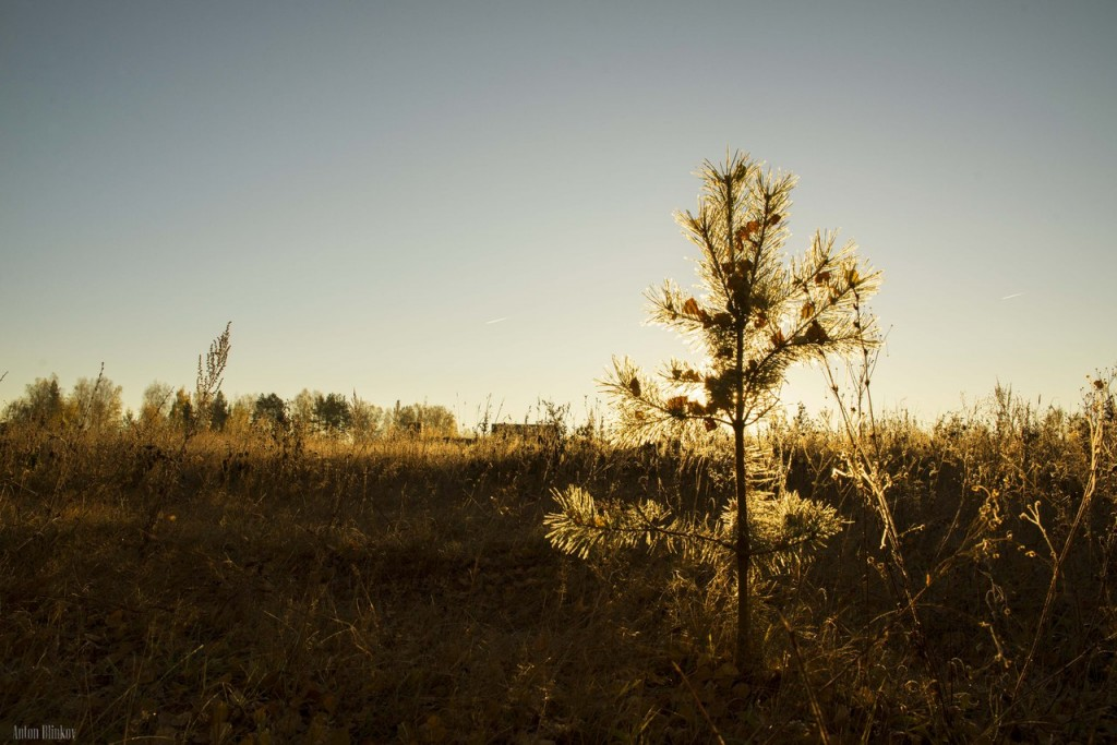 Морозное утро от Антона Блинкова 05