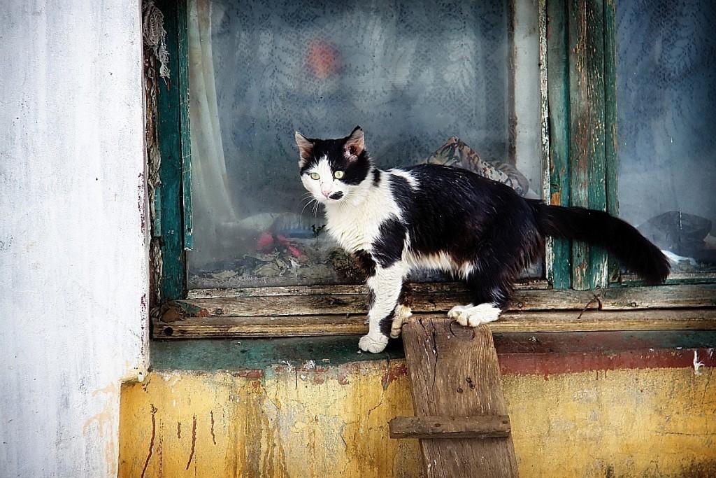 Муромские кошки и окошки 01